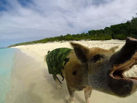 bay_of_pigs